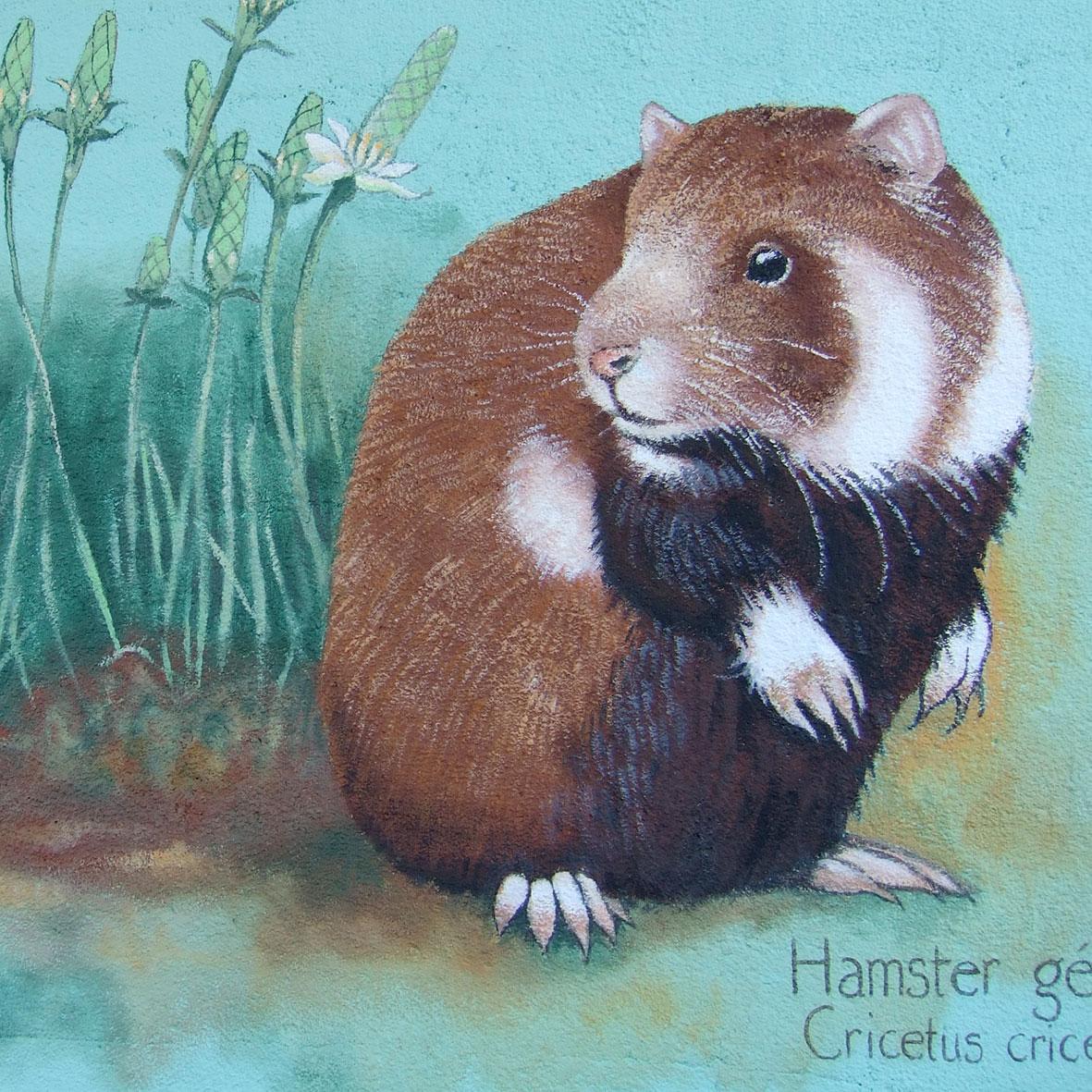 Hamster géant d'Alsace. Cricetus cricetus. Gare de Duppigheim. Fresque de Roland Perret. illusions-murales.com